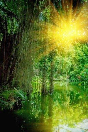 Photo pour La nature sauvage. Beau paysage de forêt tropicale avec la rivière avec réflexion de la lumière du soleil lors d'une chaude journée d'été. Image verticale. - image libre de droit