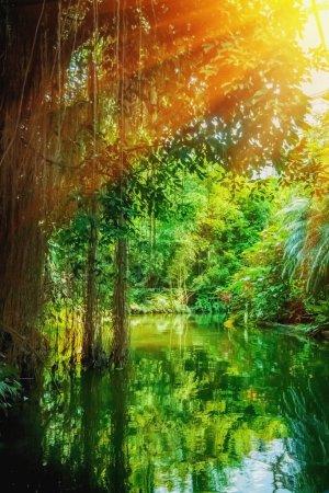 Photo pour La nature sauvage. Beau paysage de forêt tropicale avec la rivière. Image verticale. - image libre de droit