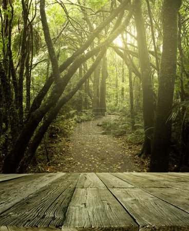 Photo for Wooden deck in tropical forest - Royalty Free Image