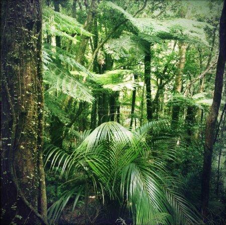 Photo pour Feuillage vert luxuriant dans la jungle tropicale - image libre de droit