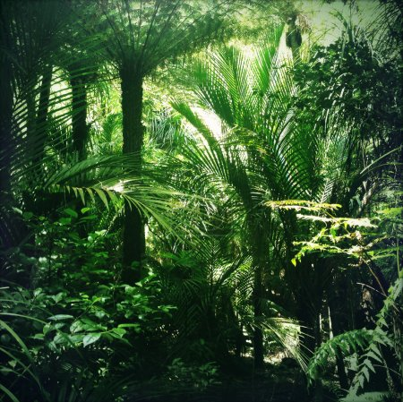 Photo for Lush green foliage in tropical jungle - Royalty Free Image