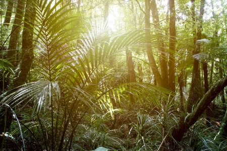 Tropical forest light