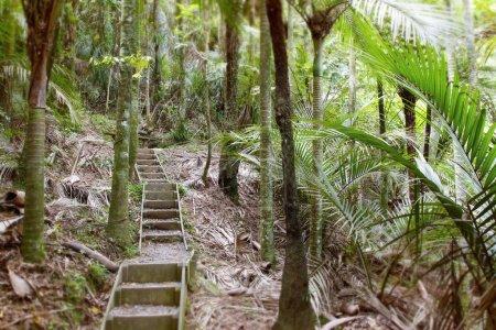 Walking trail in jungle