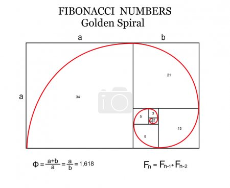 The Fibonacci spiral