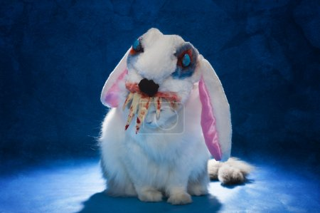 cat in costume evil bloody hare