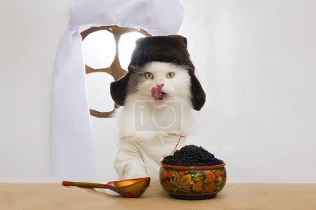 Photo pour Chat russe mange caviar - image libre de droit