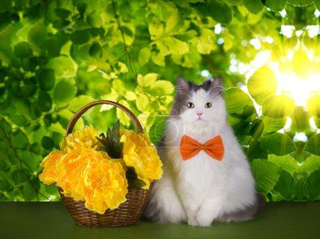 Photo pour Chat avec des fleurs printanières sur un fond de feuilles vertes - image libre de droit