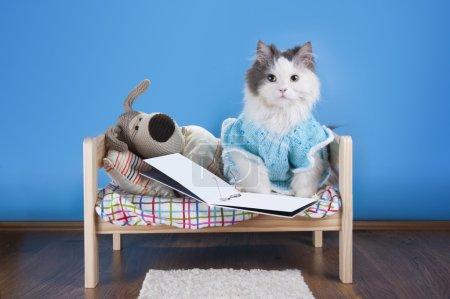 Photo pour Chat lisant un conte jouet chien - image libre de droit