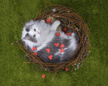 Cat in the nest on the green grass with the words love