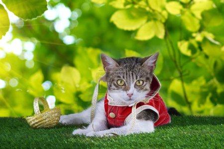 Photo pour Cape chat marche dans les bois - image libre de droit