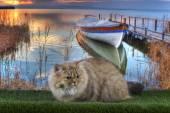 Britische Katze Angeln am Fluss