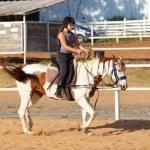 Horseback riding, lovely equestrian - young girl i...