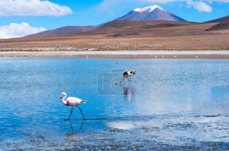 Pink flamingo in Lake