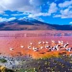 Beautiful flamingos in Laguna Colorada , Uyuni, Bolivia