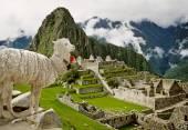 Lama in Machu Picchu, Peru