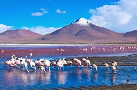 Pink flamingos in Lake Hedionda