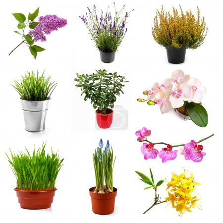 Photo for Collection with different flowers and plants, isolated on white - Royalty Free Image