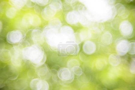 Photo for Natural green bright blur background of sunny summer forest - Royalty Free Image