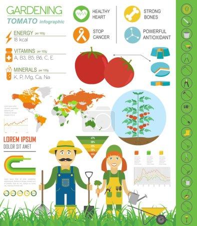Gardening work, farming infographic. Tomato. Graphic template. F