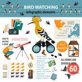 Bird watching infographic template Vector illustration