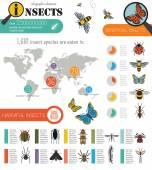 Hmyz infographic šablona