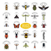 Insects icon flat style 24 pieces in set Colour version