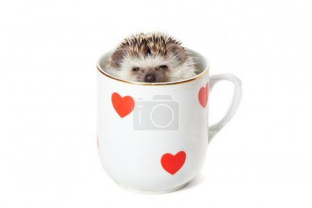 Hedgehog hiding in a cup decorated with red hearts