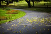 Yellow petals on the road