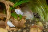 Nádherné ryby v akváriu