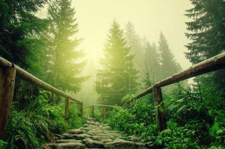 Photo pour Pierre route dans une forêt de conifères dans les montagnes - image libre de droit