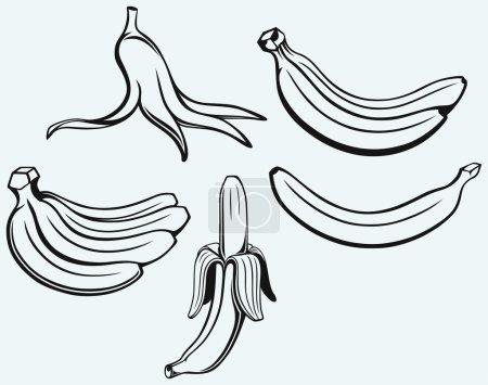 Illustration for Bunch of bananas, peeled banana and banana peel isolated on blue background - Royalty Free Image