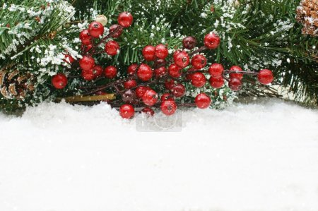 Christmas berries nestled in snow