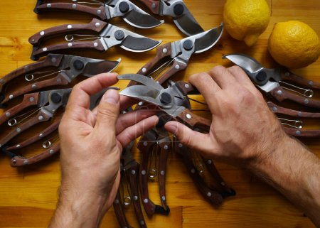 Secateurs in male hands. Photographed close-up top. A man inspects sharpening pruners. On the table a lot of pruning shears.