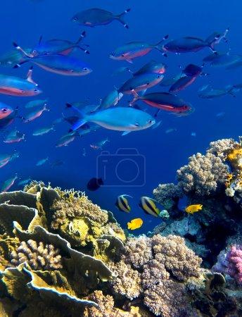 Photo pour Une sorte de paysage coloré sous l'eau - image libre de droit