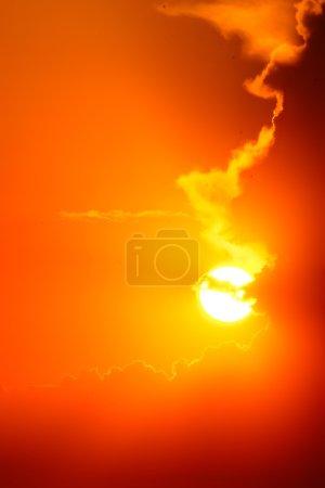 Photo pour Belle sorte d'appel du soleil - image libre de droit