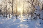 Landscape. winter forest
