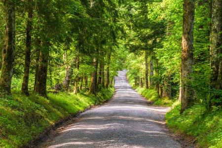 Photo pour Smoky Mountains route de campagne . - image libre de droit