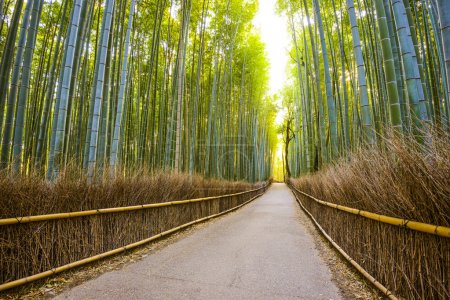 Photo for Kyoto, Japan bamboo forest. - Royalty Free Image