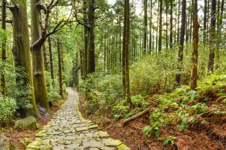 Kumano Kodo Sacred Japanese Trail