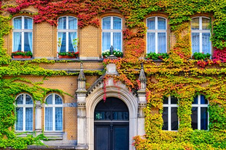 Vine Covered Building