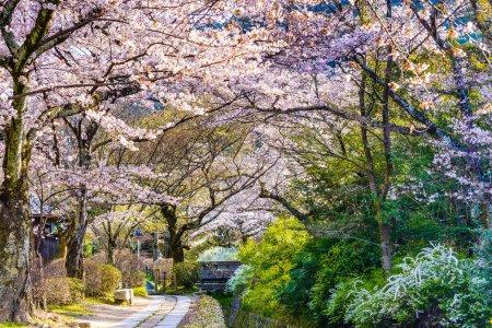 Photo pour Kyoto, Japon au Philosopher's Walk au printemps . - image libre de droit