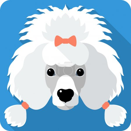 dog Poodle icon flat design