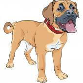 Color sketch of the working farm dog Boerboel breed standing  with red collar