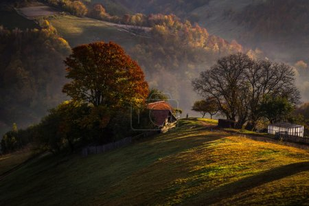 Autumn colours in the dawn on the hills