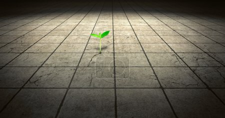 Photo for Green sprout growing out of concrete floor - Royalty Free Image