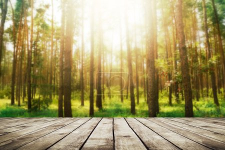 Photo for Pine forest. Beauty nature background - Royalty Free Image