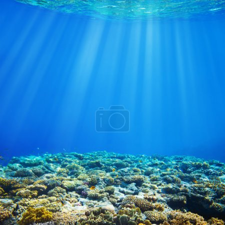 Photo for Under water coral reef and tropical fish background - Royalty Free Image