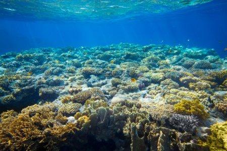 Photo pour Sous l'eau récif corallien et fond de poissons tropicaux - image libre de droit
