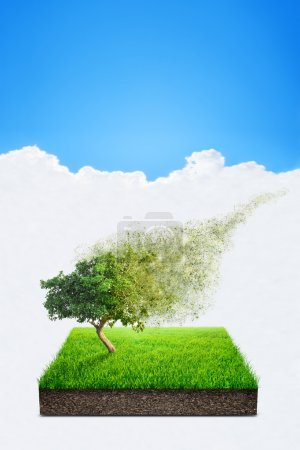 Square of green grass field with alone tree over blue sky background