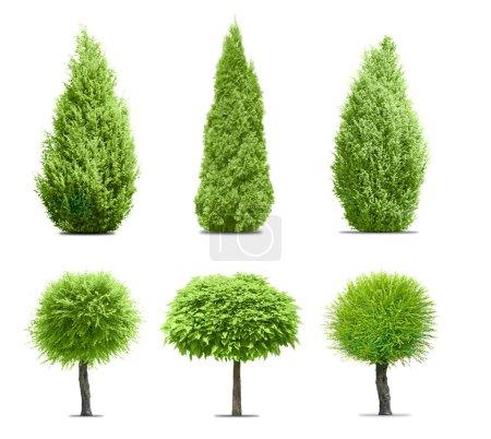 Photo pour Arbres verts différents isolés sur fond blanc - image libre de droit
